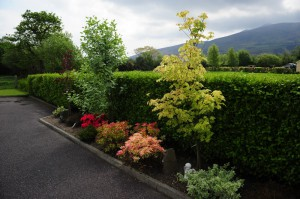 Wayside Bed and Breakfast - Killarney - Gardens